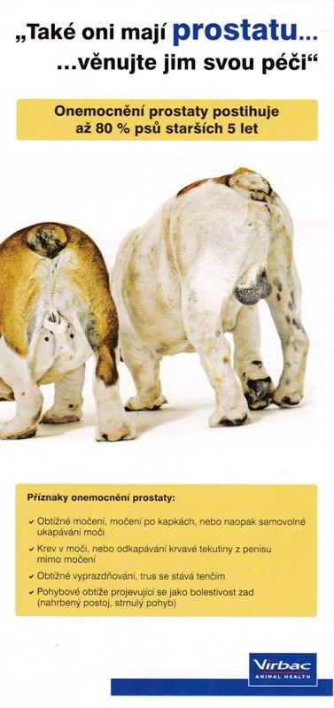 Nabízíme preventivní vyšetření prostaty pro psy starší 5 let